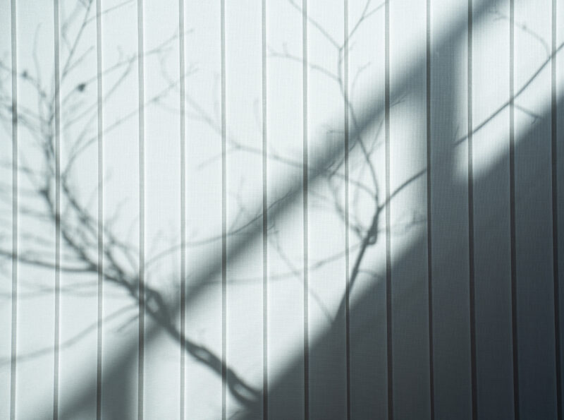 White wall with shadow of tree