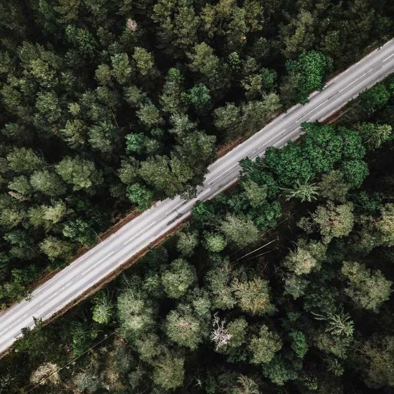 Drone view over green forest and road