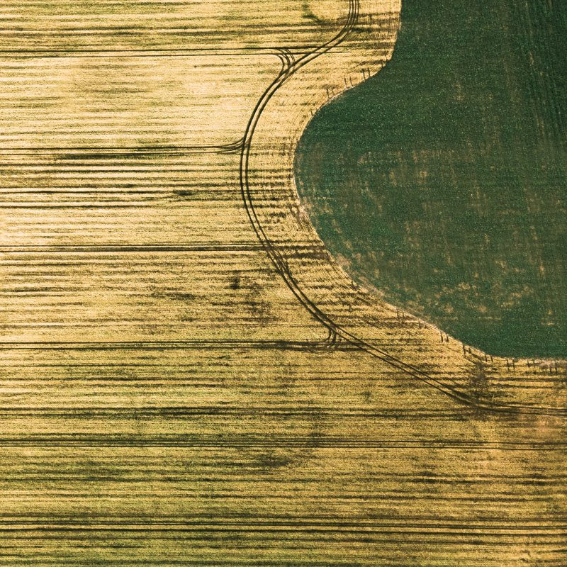 Drone image of yellow and green fields