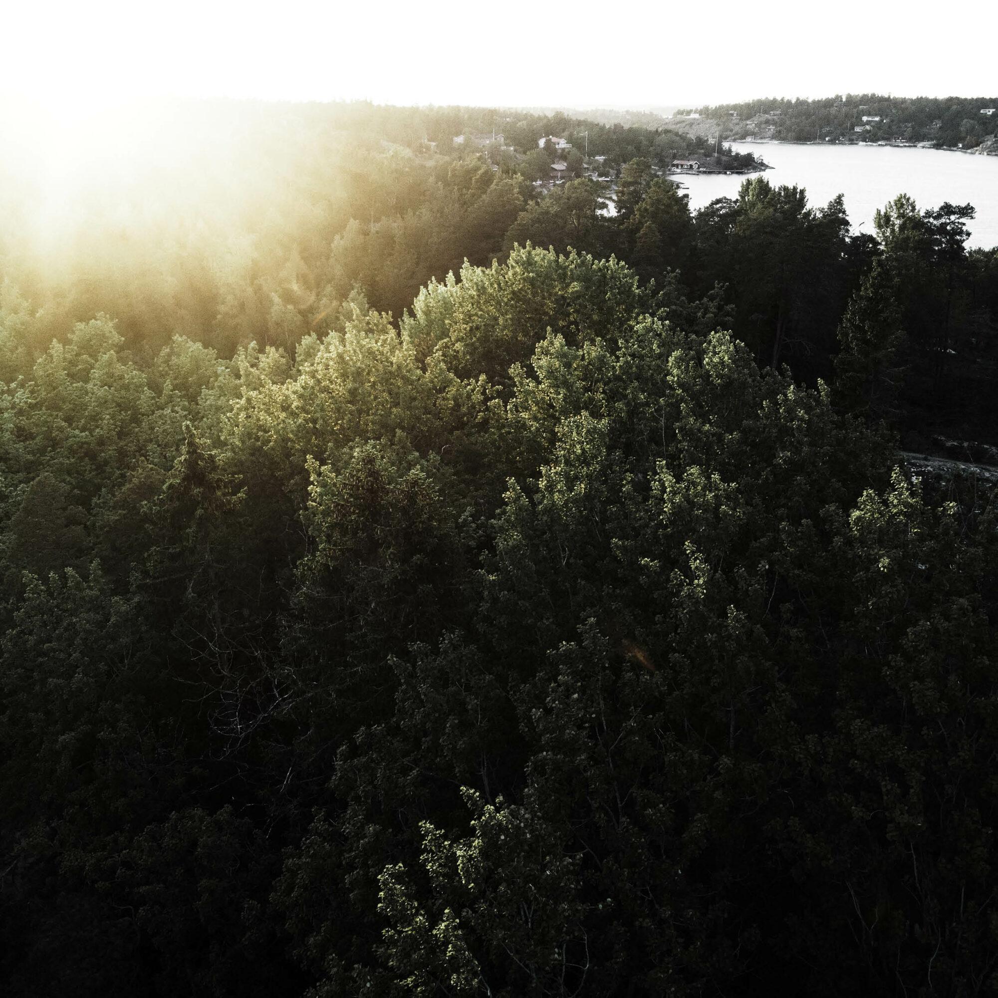 Solnedgång över skog